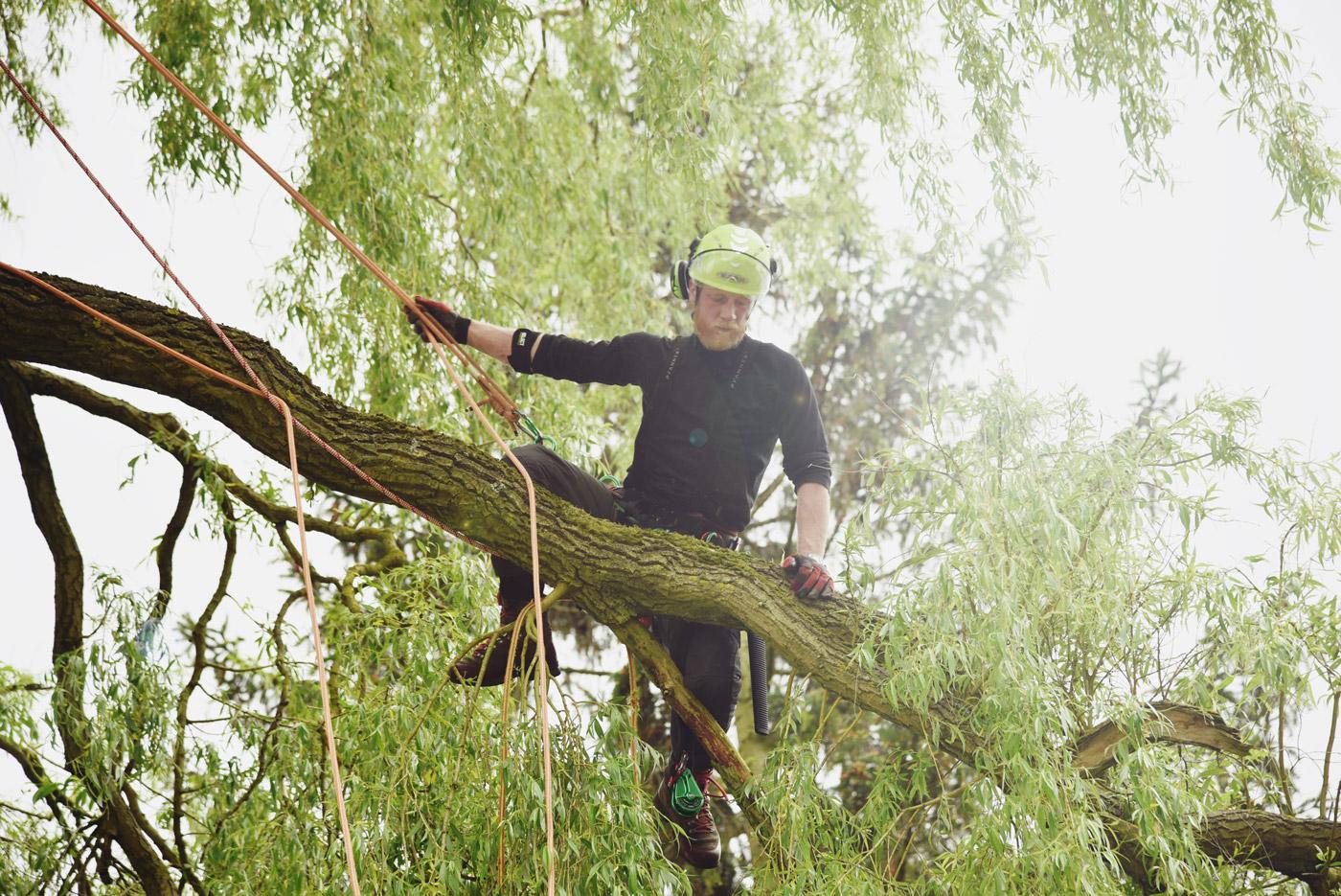 Træfældning i lokalområdet, Midtsjælland